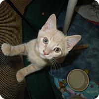 Adopt A Pet :: Duggy - Medina, OH