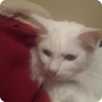 Adopt A Pet :: zz 'Gracie' courtesy listing - Cincinnati, OH