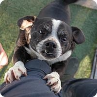 Adopt A Pet :: CLYDE - San Pablo, CA