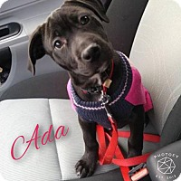 Adopt A Pet :: Ada - Buffalo, NY