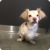 Adopt A Pet :: Luke- I am adorable! - Redondo Beach, CA