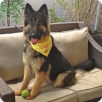 Adopt A Pet :: Beautiful Lexi - Burbank, CA