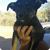 Adopt A Pet :: Mason - Tucson, AZ