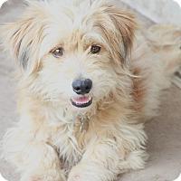 Adopt A Pet :: Nigel - Woonsocket, RI