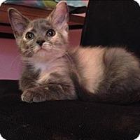Adopt A Pet :: Romy - Raleigh, NC