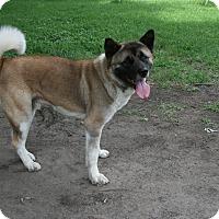 Adopt A Pet :: Yoshi - Virginia Beach, VA
