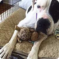 Adopt A Pet :: Baby - Manchester, NH