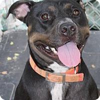 Adopt A Pet :: Espy - Savannah, MO