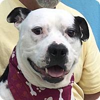 Adopt A Pet :: Rocky - Evansville, IN