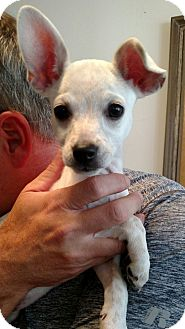 Small Dogs Rescue Knoxville Tn