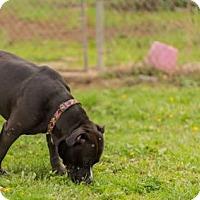 Adopt A Pet :: Major - Reedsport, OR