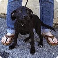 Adopt A Pet :: Bruiser - Laingsburg, MI