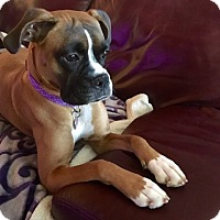 Adopt A Pet :: Merry Jane - Austin, TX