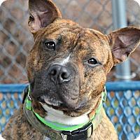 Adopt A Pet :: CARSON - Linden, NJ