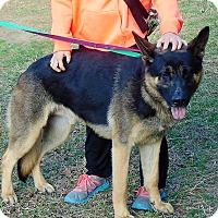Adopt A Pet :: Zayden - Portland, ME