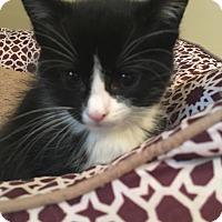 Adopt A Pet :: Stumpy - Greenville, NC
