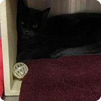 Adopt A Pet :: Jill - Salt Lake City, UT