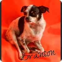 Adopt A Pet :: Branson - Orange, CA