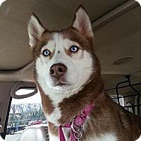 Adopt A Pet :: Sookie - Elkhart, IN
