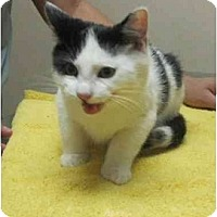 Adopt A Pet :: Alvin - Bayonne, NJ