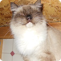Adopt A Pet :: Barbie - N. Berwick, ME