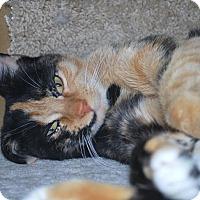 Adopt A Pet :: Stella - Prescott, AZ