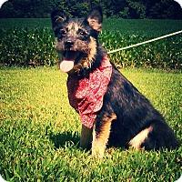 Adopt A Pet :: Olivia - Hollis, ME