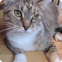 Adopt A Pet :: Magda - Covington, KY