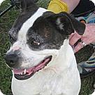 Adopt A Pet :: Tina Marie