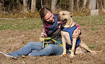 Boxer Mix Dog for adoption in Midlothian, Virginia - George 2015