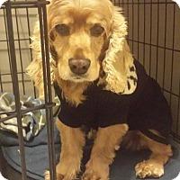 Adopt A Pet :: Mandy - Livonia, MI