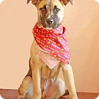 Adopt A Pet :: Kate - Waldorf, MD