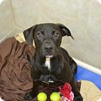 Adopt A Pet :: Roy - Miami, FL