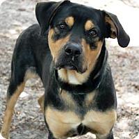 Adopt A Pet :: Raj - Bradenton, FL