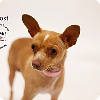Adopt A Pet :: Miss Lost - Aqua Dulce, CA