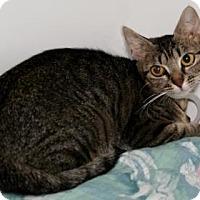 Adopt A Pet :: Harper Lee - Bradenton, FL