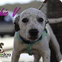 Adopt A Pet :: Sophie - Alpharetta, GA