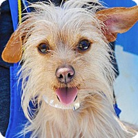 Terrier (Unknown Type, Small) Mix Dog for adoption in Long Beach, California - Peanut
