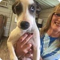 Adopt A Pet :: Jessip - Rexford, NY