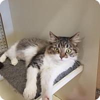 Adopt A Pet :: Catsy( Cassie) - Kenosha, WI