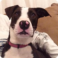 Adopt A Pet :: Serena - Akron, OH