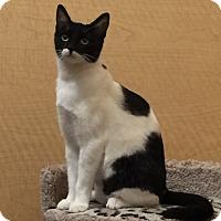 Adopt A Pet :: DANI - Brea, CA