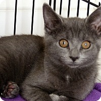 Adopt A Pet :: Sushi - Durham, NC
