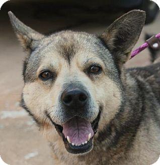 Norwegian Elkhound Mix Dog for adoption in Kennesaw, Georgia - Kanga
