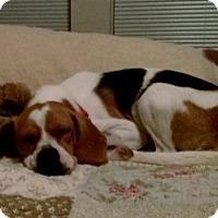 Adopt A Pet :: Angela - Houston, TX