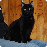 Adopt A Pet :: Rome - Parsons, KS
