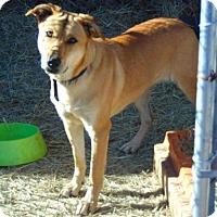 Adopt A Pet :: Blush - Seattle, WA