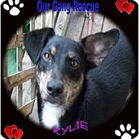 Adopt A Pet :: Kylie - Cincinnati, OH
