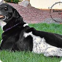 Adopt A Pet :: Zeke - Tempe, AZ