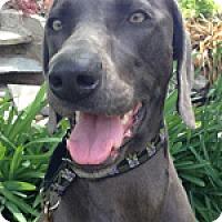 Adopt A Pet :: Nadja - St. Louis, MO